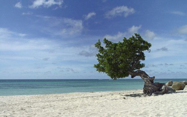 eagle beach serge melki