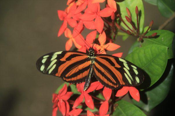 butterflyfarm-jasminenears