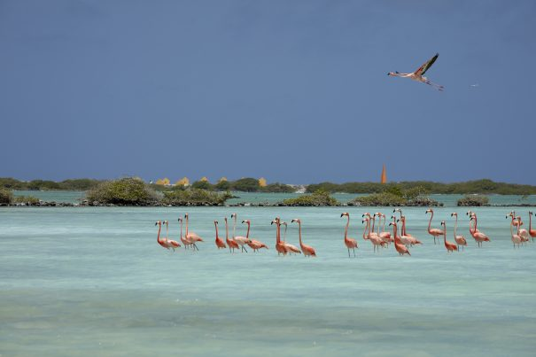 why to visit bonaire this fall